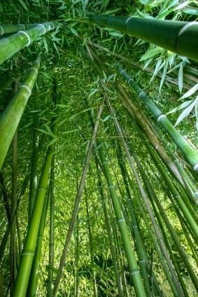 まっすぐに竹のように